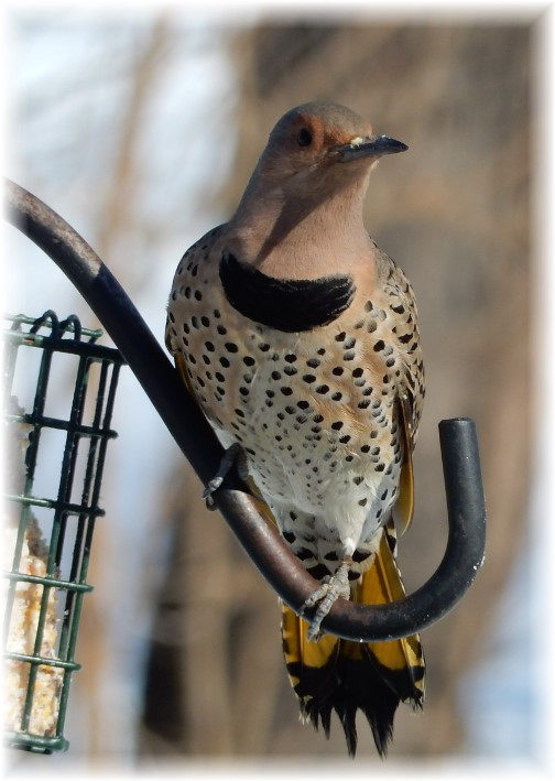 Flicker photo by Marion Barber 2/11/16 (Click to enlarge)