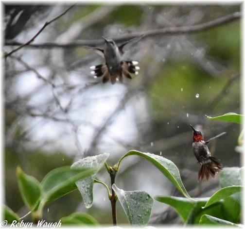 Flying birds (photo by Robyn Waugh)