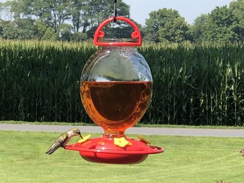 Hummingbird 7/27/19