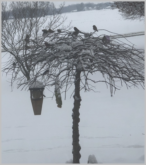 March snow birds 3/1/19