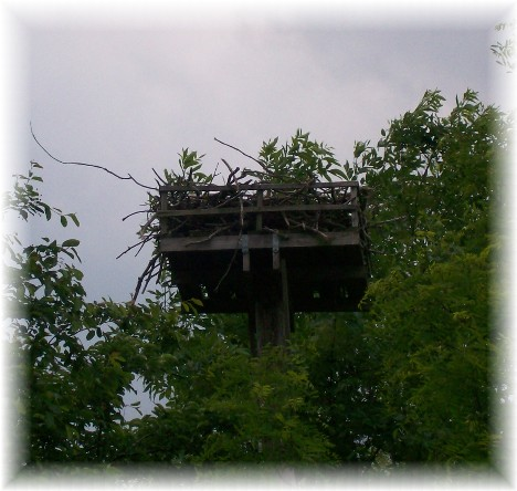 Osprey nest at Sandy Cove, Chesapeake Bay