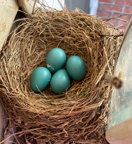 Porch light robin nest eggs