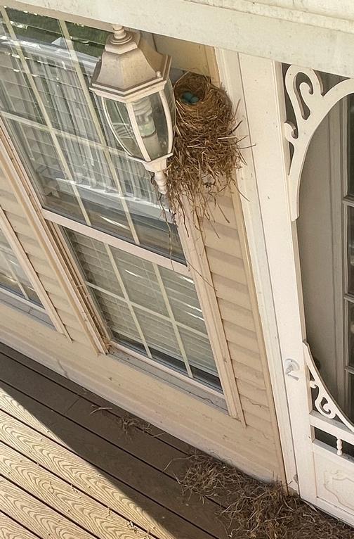 Porch light robin nest