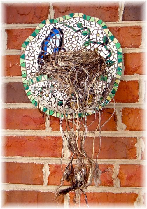 Robin's nest in North Carolina