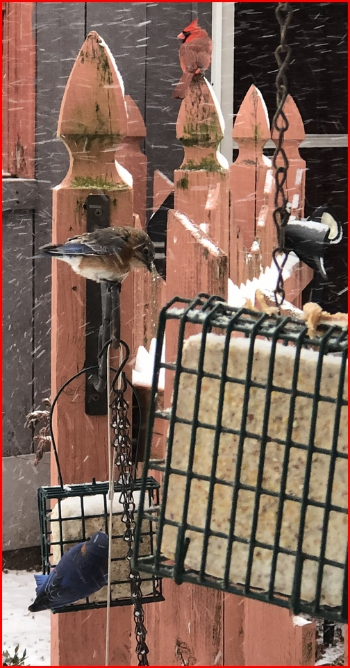 Snowy day birds 2/20/19