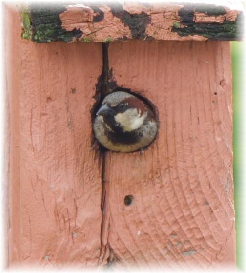 Bird house resident 5/14/17