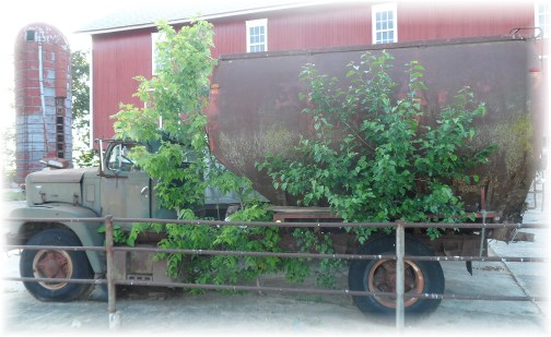 Tree-covered truck at Creekside Greenhouse 6/3/13