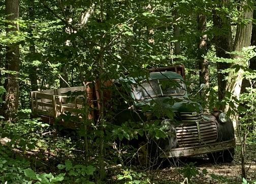 Truck in woods