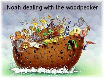 Woodpecker on Noah's ark