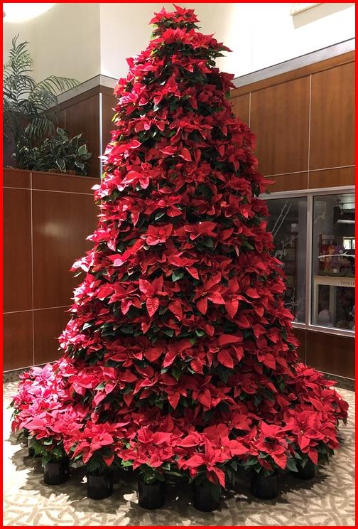 Lancaster General Hospital Poinsettia tree