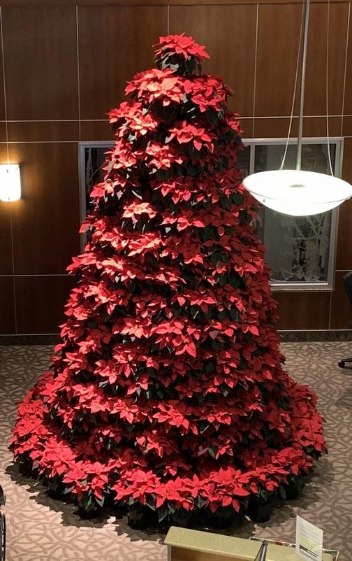 Lancaster General Poinsettia Christmas tree 12/6/19