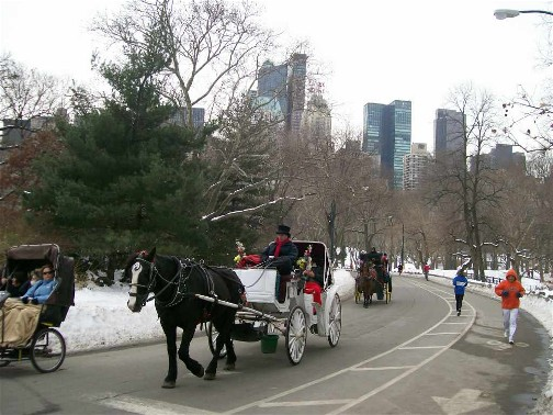 Central Park carriages NYC