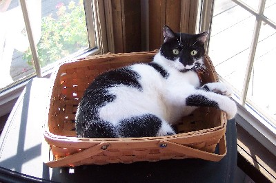 Photo of our cat Dottie in basket