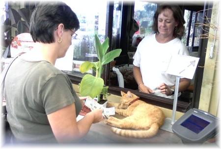 Brooksyne with greenhouse cat