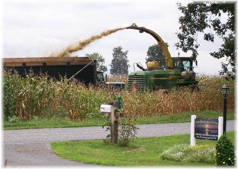 Corn chopping harvest 8/24/10