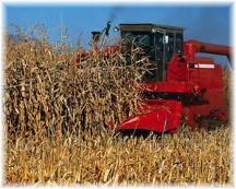 Modern corn harvest