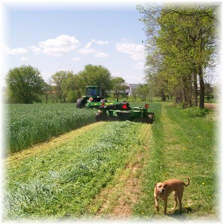 Discbine harvesting hay, Lancaster County PA