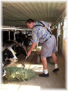 Feeding cows on Amish farm 6/26/10