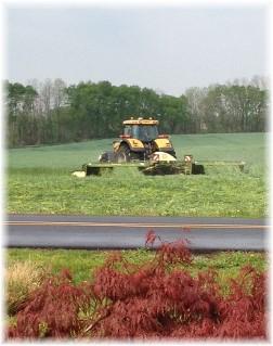Hay harvest 5/6/15