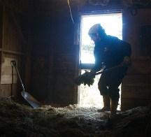 Mucking barn