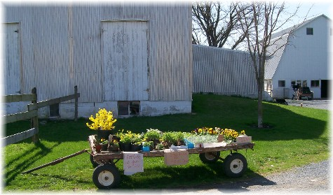 Lancaster County PA Amish flower cart 4/1/10