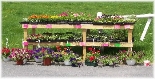 Amish roadside flower stand 5/11
