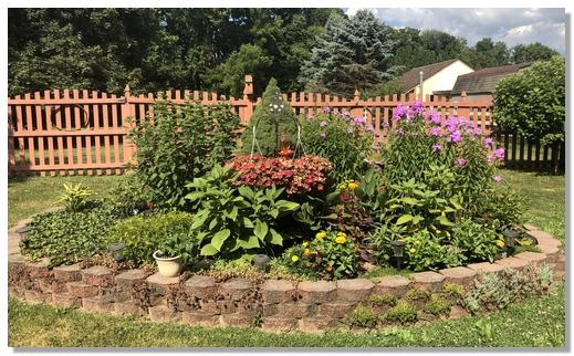 Backyard flowers 7/18/18