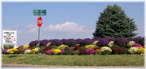 Corner Acre near Mount Joy, Pennsylvania