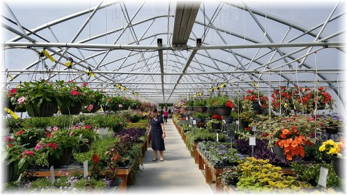 Country View Greenhouse 5/9/17