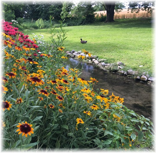 Flowers along Donegal Creek 7/2/15