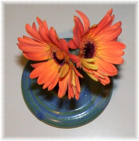 Double Gerber Daisy bloom