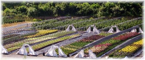 Eaton Farm greenhouses 6/30/11