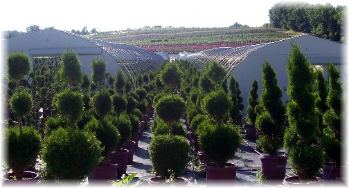 Eaton Farm topiary 6/30/11