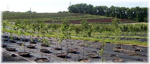Eaton Farm trees 6/30/11