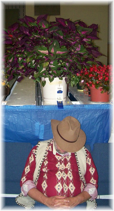 First prize Coleus at E-town Fair