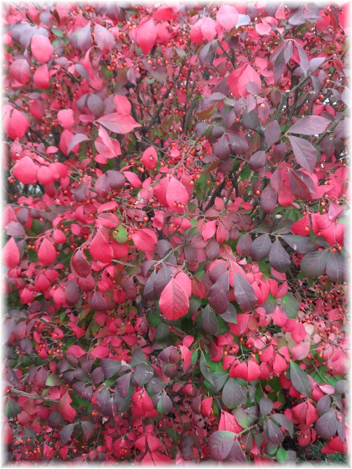 Close-up of burning bush