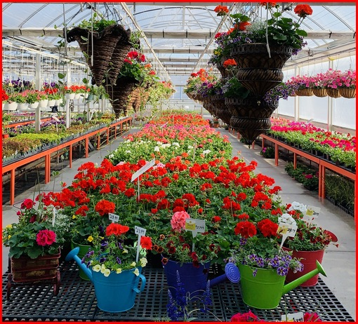 Fisher's greenhouse, Strasburg, PA