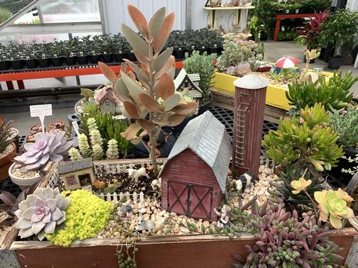 Fisher's Greenhouse barnyard arrangement