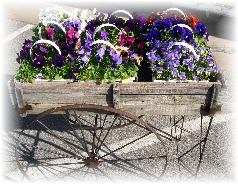 Flower cart, Lancaster County PA