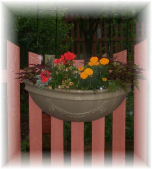 Flower planter in rain 6/22/11
