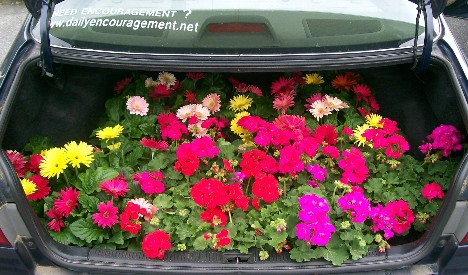 Flowers in trunk