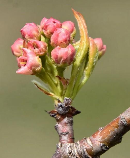 Flowering buds photos by Doris High