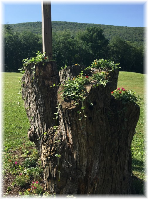 Columbia County flowers in tree stump 6/28/17