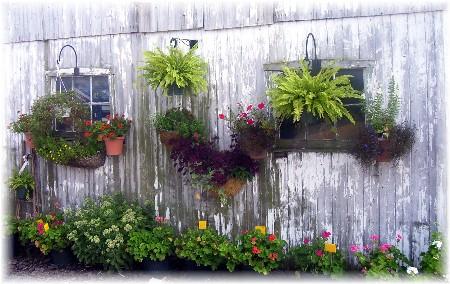 Flowers on barn