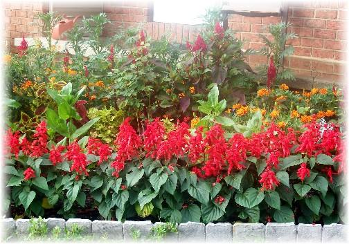 Brooksyne's flowers 7/25/11