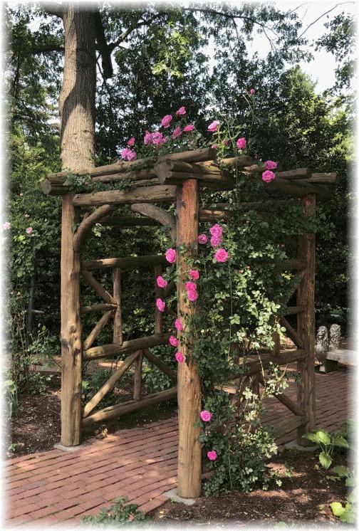 Climbing rose on arbor at Hershey Gardens 5/29/18