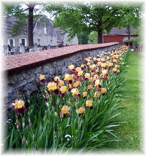 Irises at Donegal Springs Presbyterian Church
