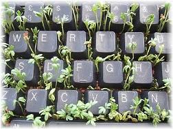 Keyboard planter