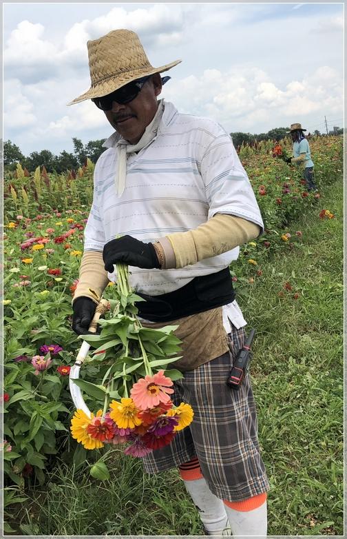 Kraybill Church Road flower harvest 8/7/18