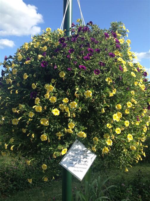 Hanging flowers in Lebanon Trail Garden 8/28/15